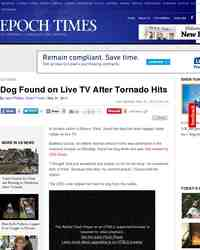 Dog Found on Live TV After Tornado Hits: Epoch Times